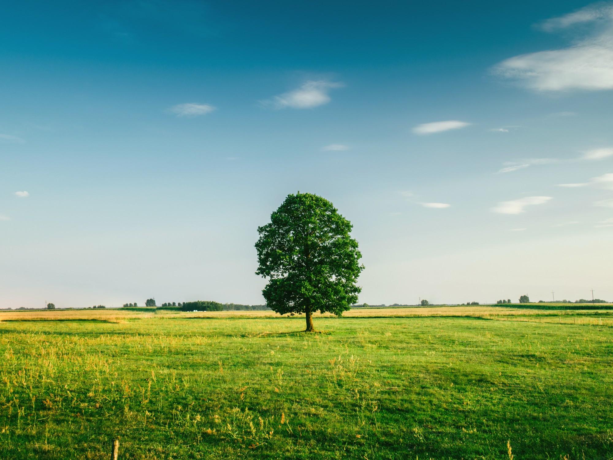 Paslauga ūkininkams - žemės ūkio apyvartinis kreditas be hipotekos ir palūkanų kompensacija